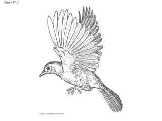 Figure 17-0