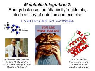 Bioc 460 Spring 2008 - Lecture 41 (Miesfeld)