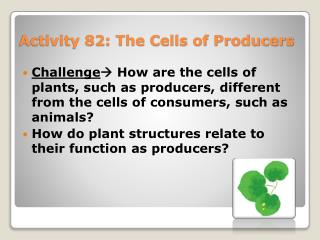 Activity 82: The Cells of Producers