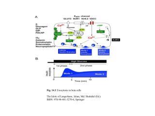 Fig. 14.1  Exocytosis in beta cells The Islets of Langerhans, Islam, Md. Shahidul (Ed.)