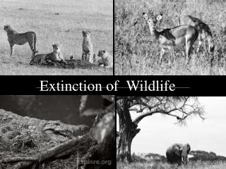 Extinction of  Wildlife
