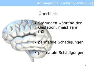 St rungen der Gehirnentwicklung