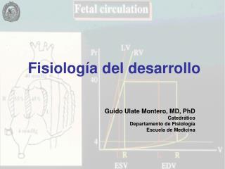 Fisiología del desarrollo