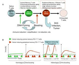 DNA Priming