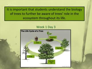Lifecycle of Trees