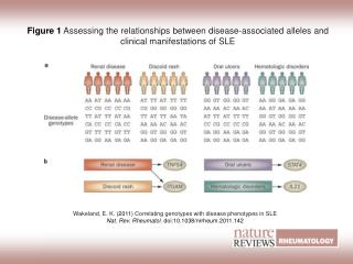 Wakeland, E. K.  (2011)  Correlating genotypes with disease phenotypes in SLE
