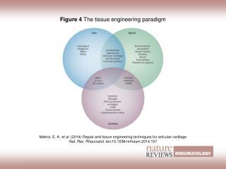 Figure 4  The tissue engineering paradigm