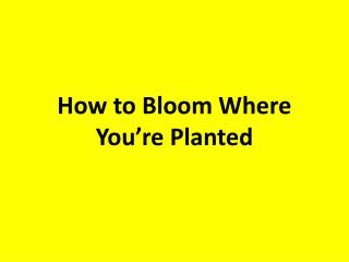 How to Bloom Where You're Planted