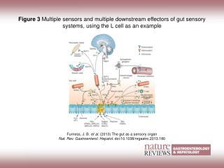Furness, J. B.  et al. (2013)  The gut as a sensory organ