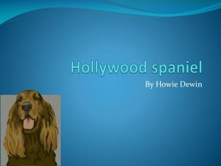 Hollywood spaniel