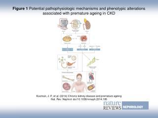 Kooman, J. P.  et al.  (2014)  Chronic kidney disease and premature ageing