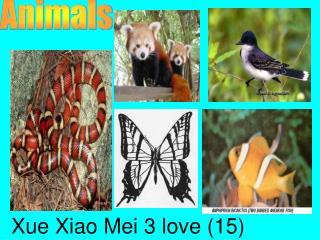 Xue Xiao Mei 3 love (15)