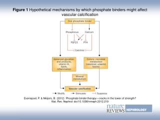 Figure 1 Hypothetical mechanisms by which phosphate binders might affect vascular calcification