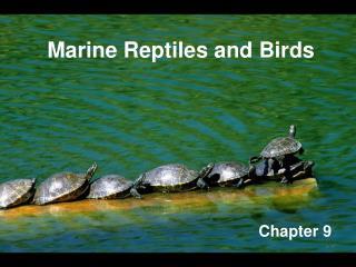 Marine Reptiles and Birds