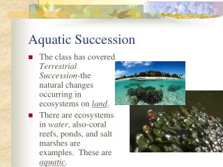 Aquatic Succession