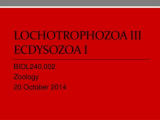 lochotrophozoa III ecdysozoa I