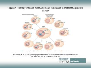 Figure 1  Therapy-induced mechanisms of resistance in metastatic prostate cancer