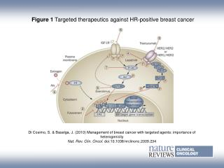 Figure 1  Targeted therapeutics against HR-positive breast cancer