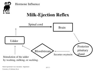 Milk-Ejection Reflex