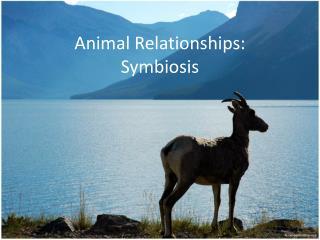 Animal  Relationships : Symbiosis