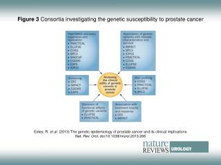 Figure 3  Consortia investigating the genetic susceptibility to prostate cancer