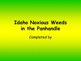 Idaho Noxious Weeds in the Panhandle
