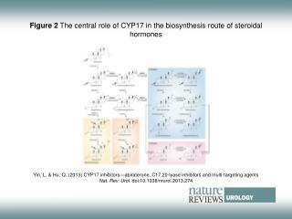 Figure 2  The central role of CYP17 in the biosynthesis route of steroidal hormones