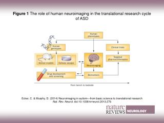 Figure 1  The role of human neuroimaging in the translational research cycle of ASD