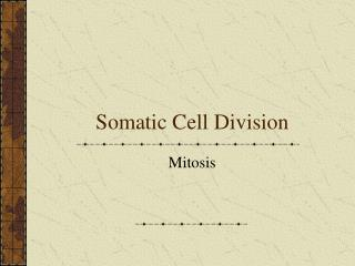 Somatic Cell Division