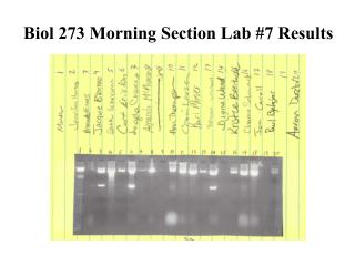 Biol 273 Morning Section Lab #7 Results
