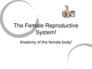 The Female Reproductive System!