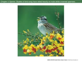 Chapter 2 Opener: Studies of bird song have relied heavily on male white-crowned sparrows