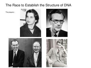 The Race to Establish the Structure of DNA The players::