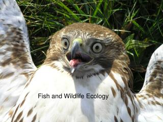 Fish and Wildlife Ecology