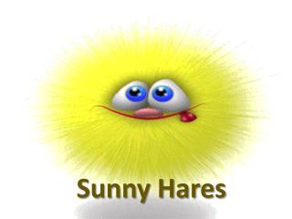Sunny Hares