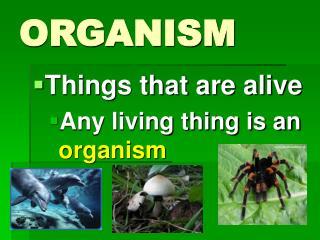 ORGANISM