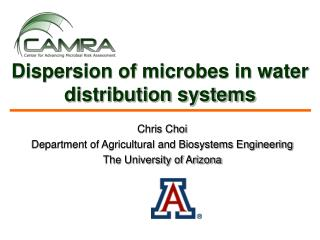 Dispersion of microbes in water distribution systems