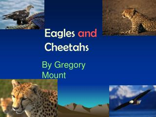 Eagles  and  Cheetahs