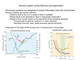 Sensory system tuning (filtering) and organization