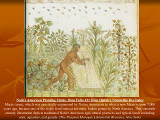 Native American Planting Maize, from Folio 121 from Histoire Naturelles Des Indes