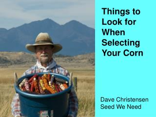Things to Look for When Selecting Your Corn