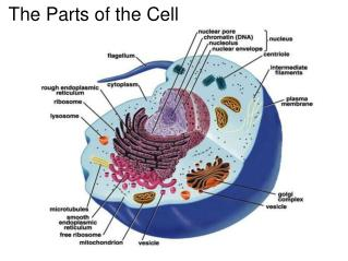 The Parts of the Cell