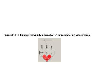 Figure (E) F-1. Linkage disequilibrium plot of  VEGF  promoter polymorphisms .