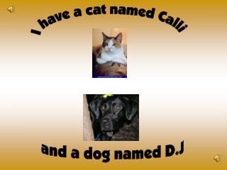 I have a cat named Calli