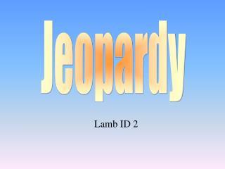 Lamb ID 2