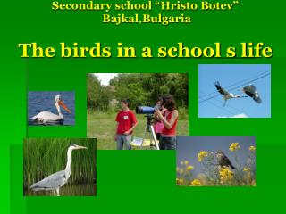 "Secondary school ""Hristo Botev""  Bajkal,Bulgaria The birds in a school s life"
