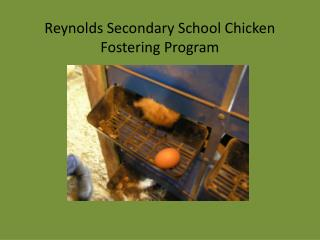 Reynolds Secondary School Chicken Fostering Program