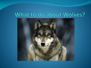 What to do about Wolves?
