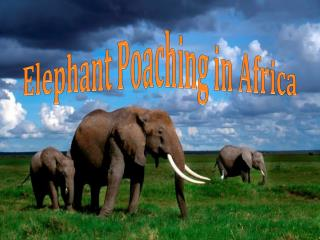 Elephant Poaching in Africa