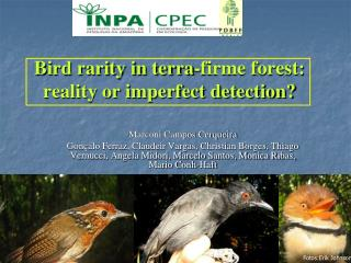 Bird rarity in terra-firme forest: reality or imperfect detection?